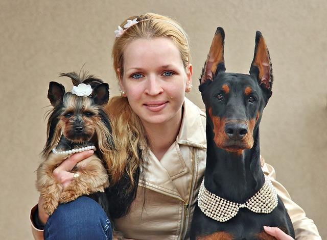 Curso de adiestrador canino en Ciudad Real