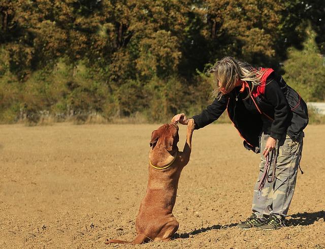 Adiestramiento en el centro canino de Ciudad Real