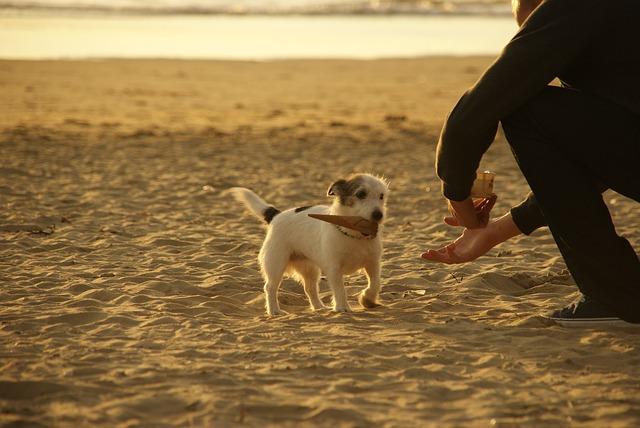 Adiestramiento canino en grupo