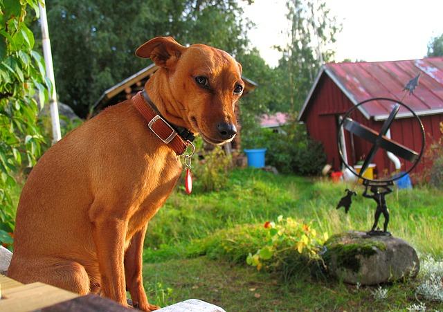 Adiestrador canino Ciudad Real