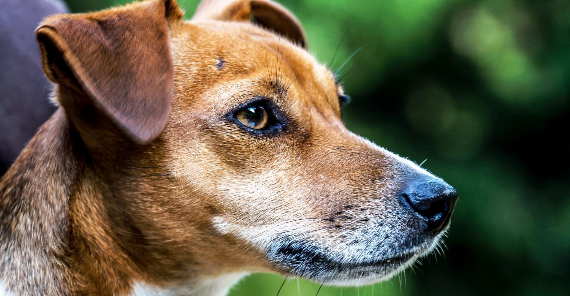 Adiestradores-canino-en-Ciudad-Real